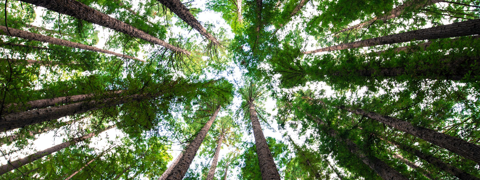 Photo of a forest pointing upwards towards the sky as light breaks through the leaves.